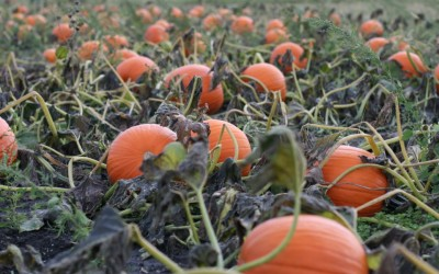 Wilkes County Farmers Market  Pumpkin Patch and Fall Harvest